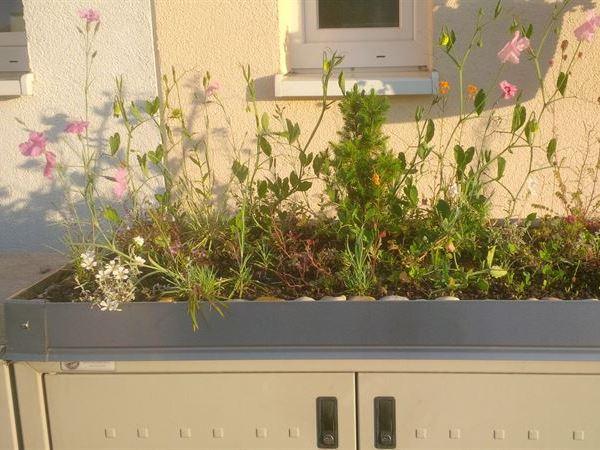 Pflanzrahmen mit Bepflanzung
